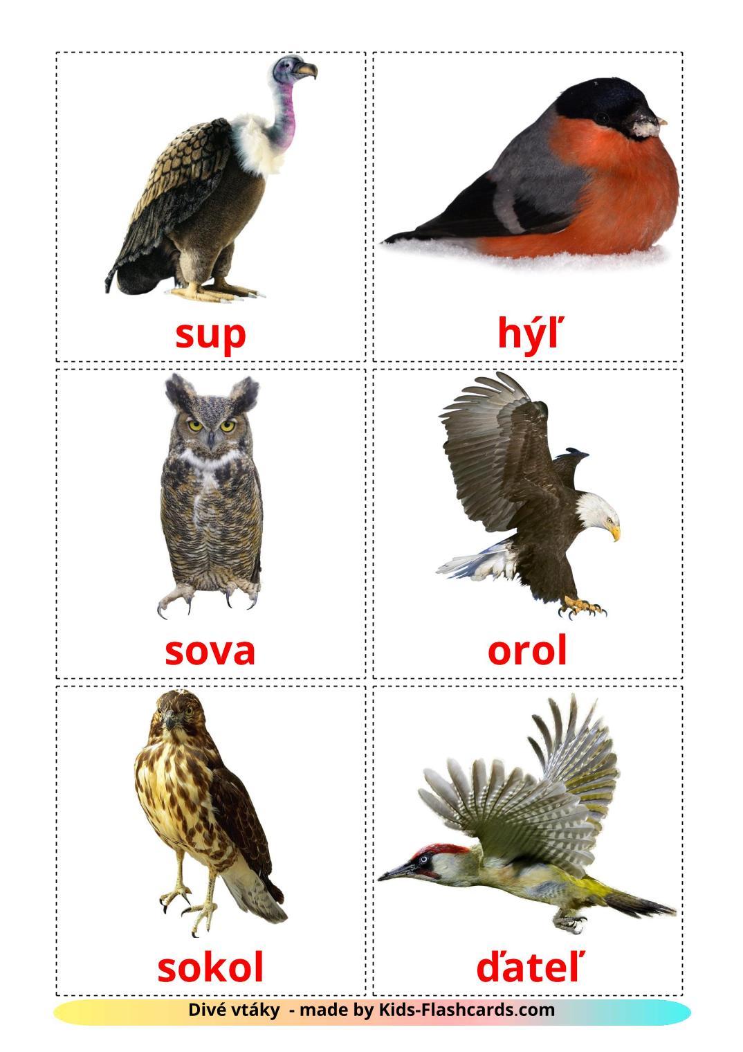 Wild birds - 17 Free Printable slovak Flashcards