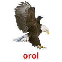 orol picture flashcards