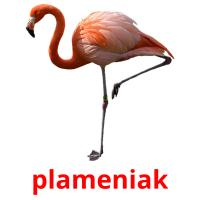 plameniak picture flashcards