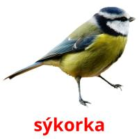 sýkorka picture flashcards