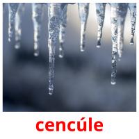 cencúle picture flashcards