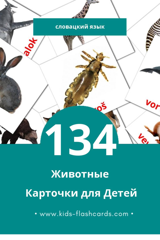 """""""Zvieratá"""" - Визуальный Словацком Словарь для Малышей (134 картинок)"""