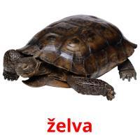 želva picture flashcards