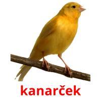 kanarček picture flashcards