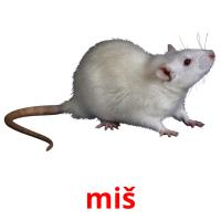 miš picture flashcards