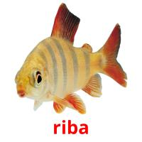 riba picture flashcards