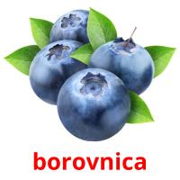 borovnica picture flashcards