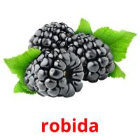 robida picture flashcards