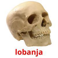 lobanja picture flashcards