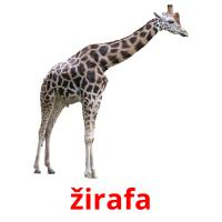 žirafa picture flashcards