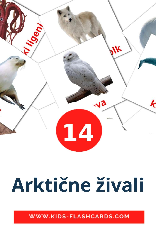 14 Arktične živali Picture Cards for Kindergarden in slovenian