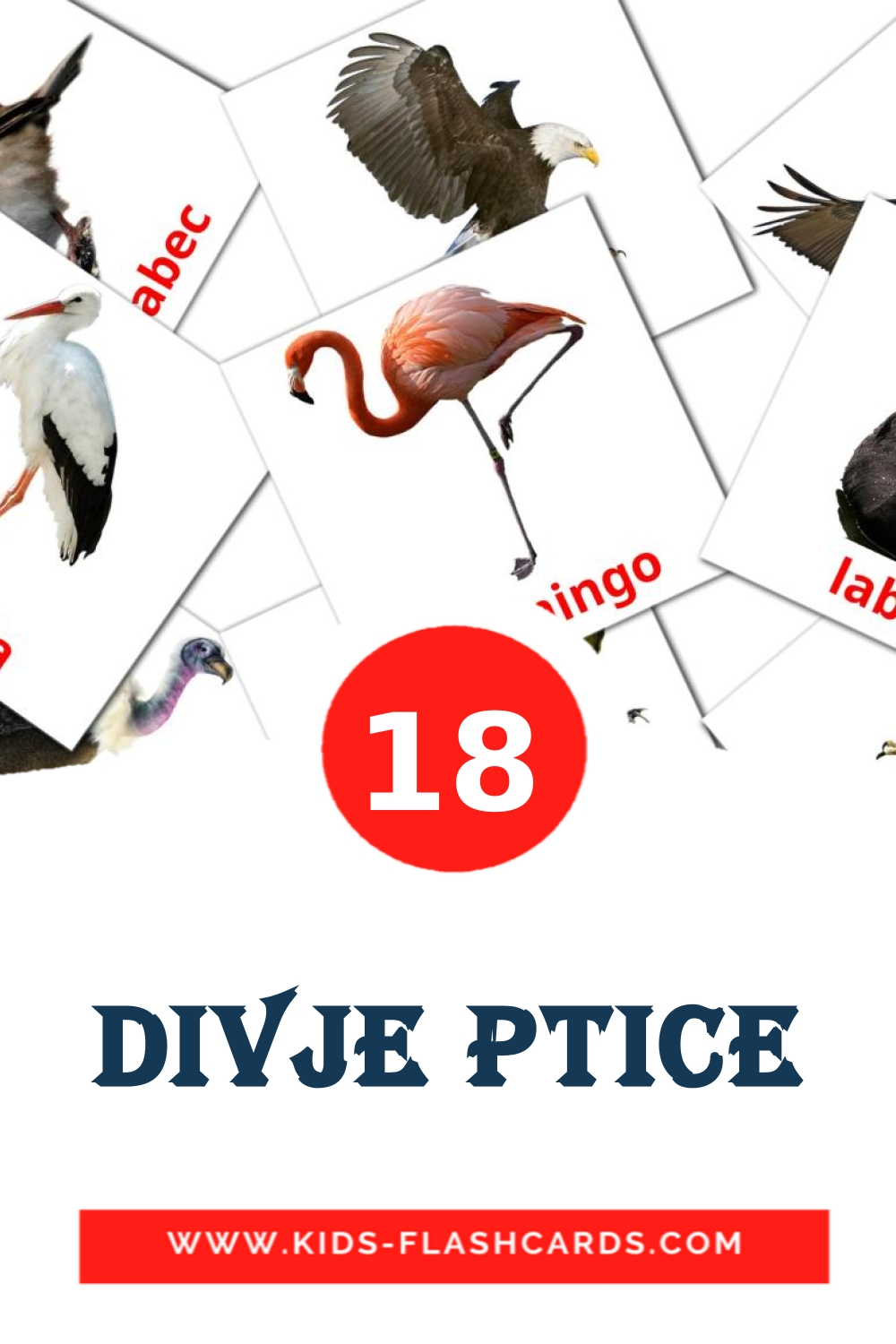 18 Divje ptice Picture Cards for Kindergarden in slovenian