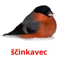 ščinkavec picture flashcards