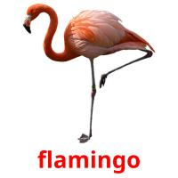 flamingo picture flashcards