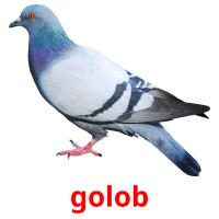 golob picture flashcards