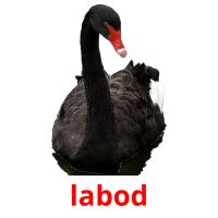 labod picture flashcards