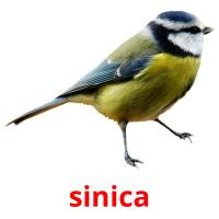 sinica picture flashcards