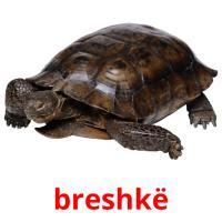 breshkë picture flashcards