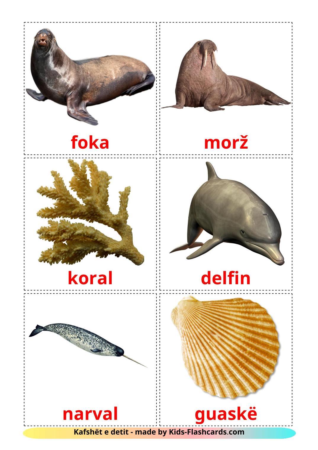 Sea animals - 29 Free Printable albanian Flashcards