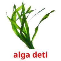 alga deti picture flashcards