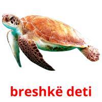 breshkë deti picture flashcards