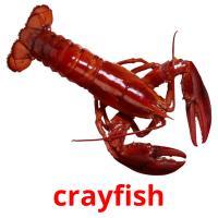 crayfish picture flashcards