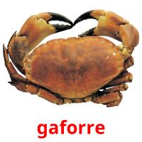 gaforre picture flashcards