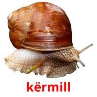 kërmill picture flashcards