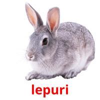 lepuri picture flashcards