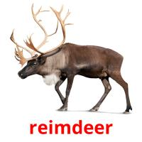 reimdeer picture flashcards