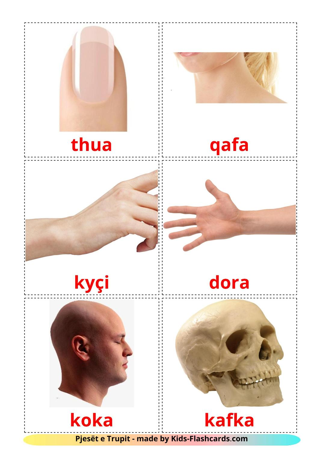 Body Parts - 26 Free Printable albanian Flashcards