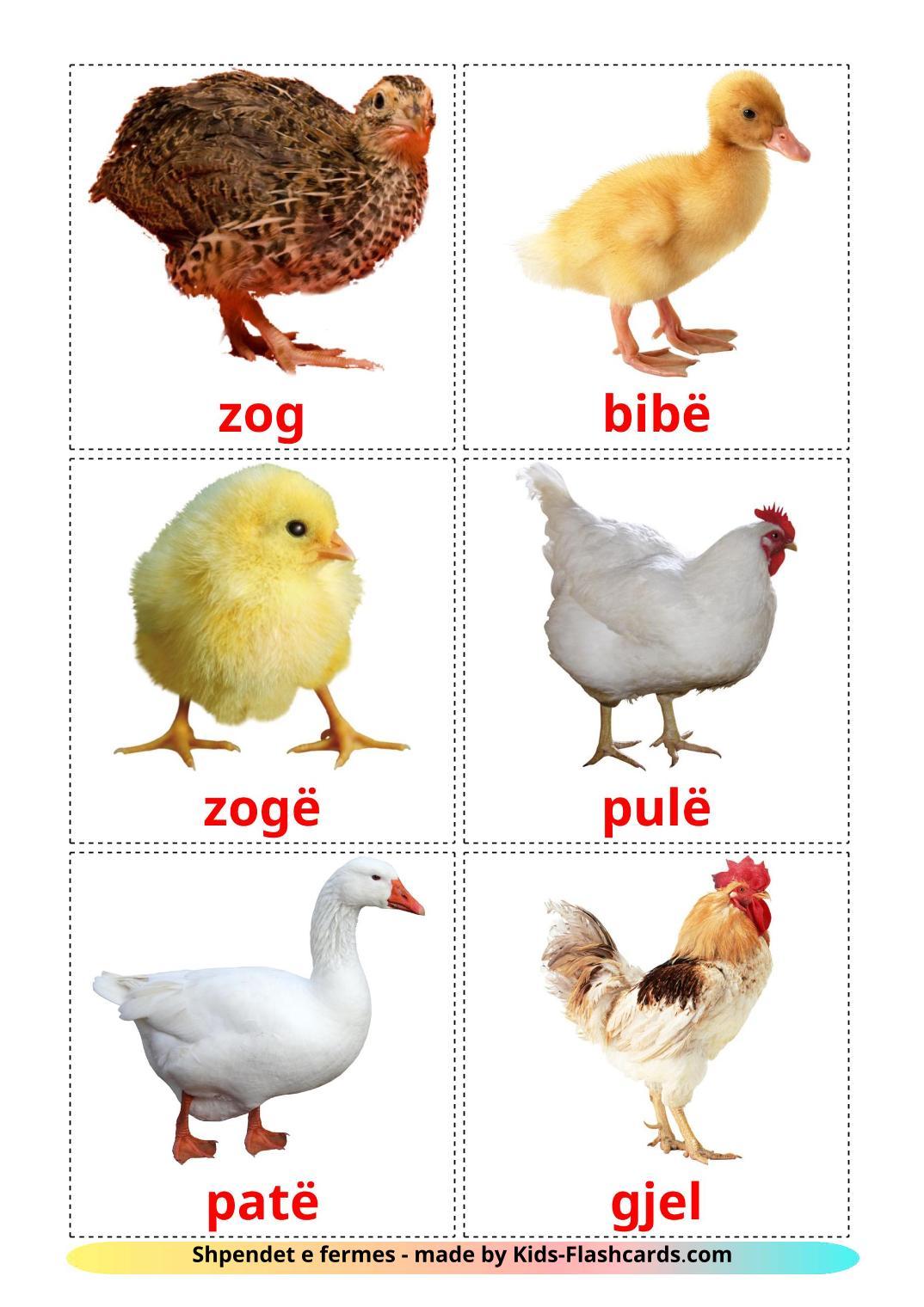 Farm birds - 11 Free Printable albanian Flashcards