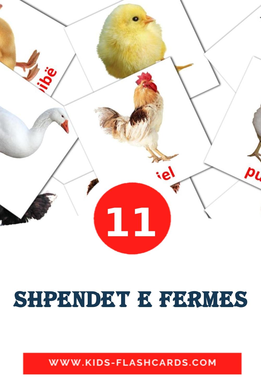 11 Shpendet e fermes Picture Cards for Kindergarden in albanian