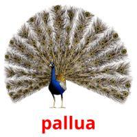 pallua picture flashcards