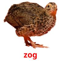 zog picture flashcards