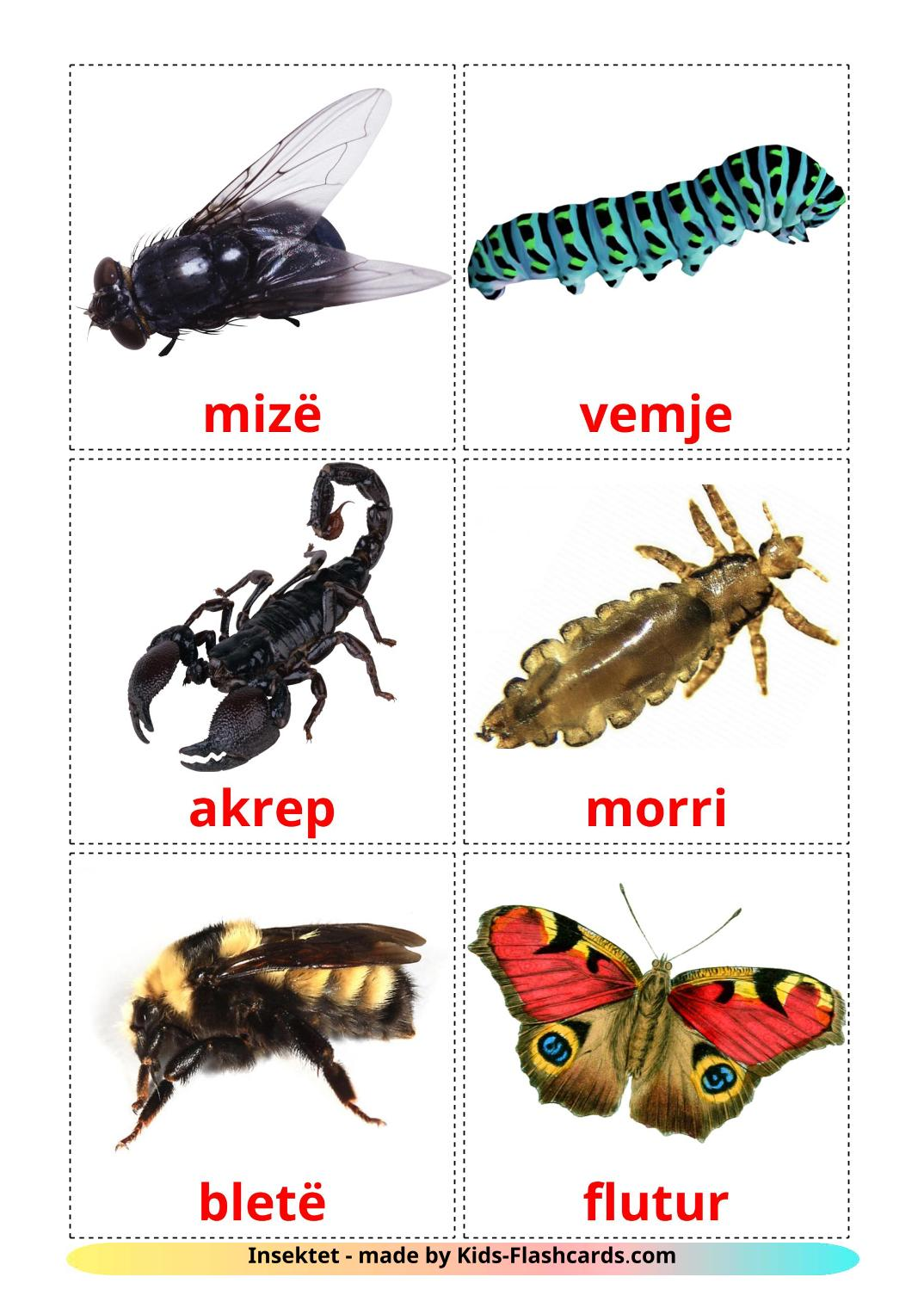 Insects - 23 Free Printable albanian Flashcards