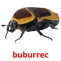 buburrec picture flashcards