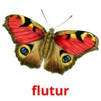 flutur picture flashcards