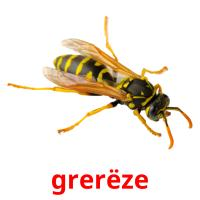 grerëze picture flashcards