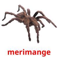 merimange picture flashcards