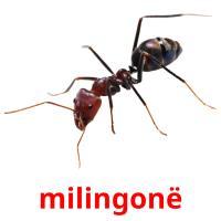 milingonë picture flashcards