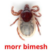morr bimesh picture flashcards