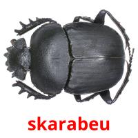 skarabeu picture flashcards