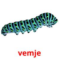vemje picture flashcards