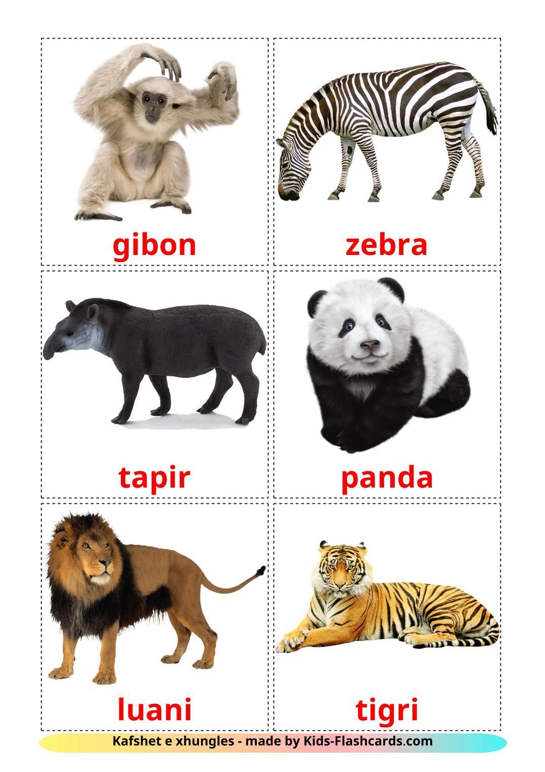 Jungle animals - 21 Free Printable albanian Flashcards