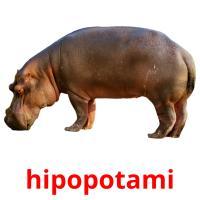 hipopotami picture flashcards
