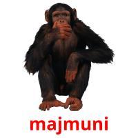 majmuni picture flashcards