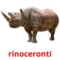 rinoceronti picture flashcards