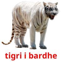 tigri i bardhe picture flashcards