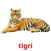 tigri picture flashcards